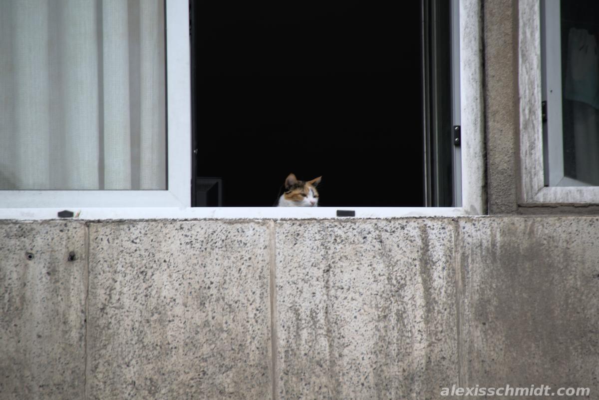 Cat in Gran Canaria