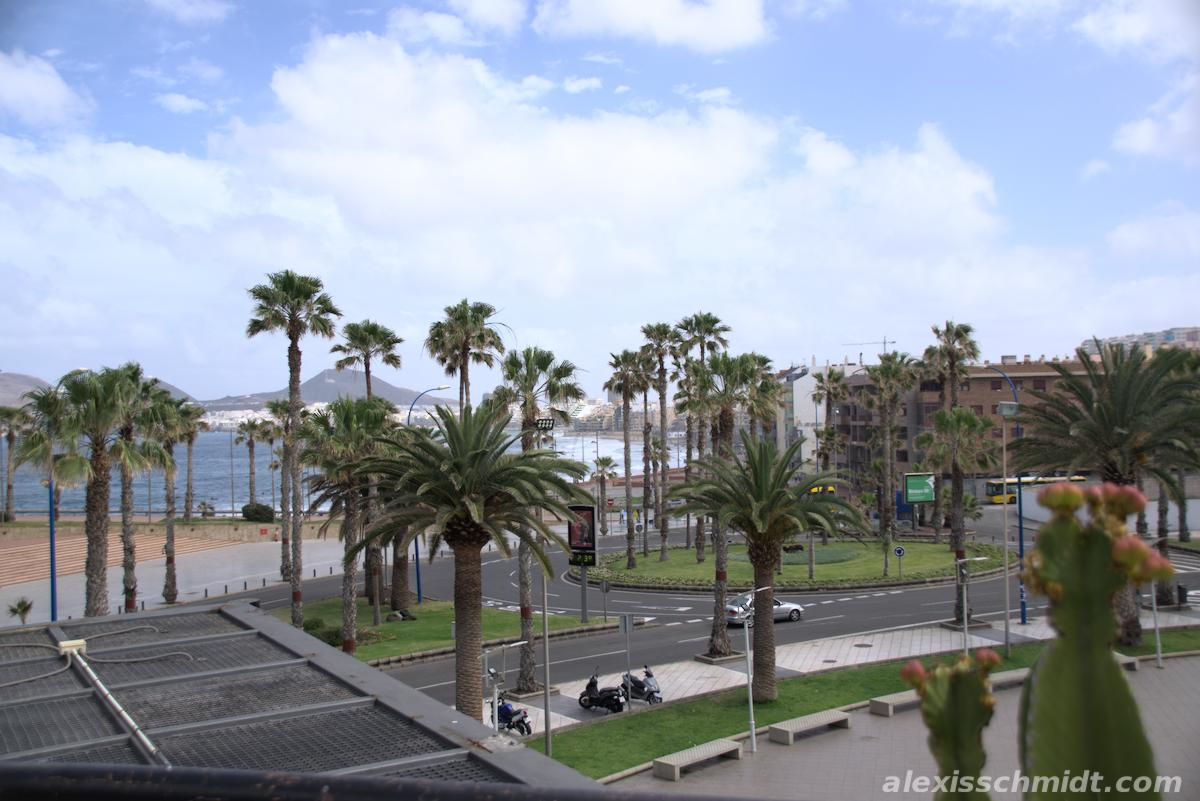 Palm Trees in front of Centro Comercial Las Arenas, Gran Canaria