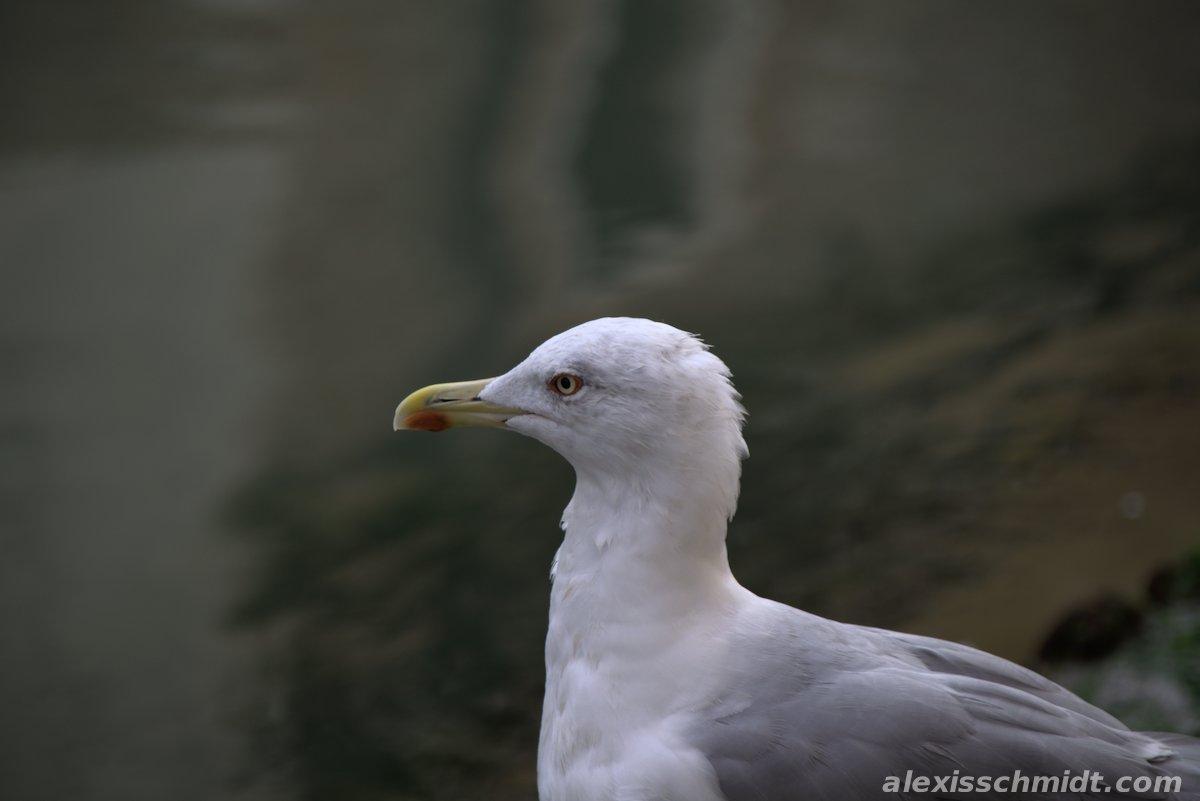 Seagull in Venice, Italy
