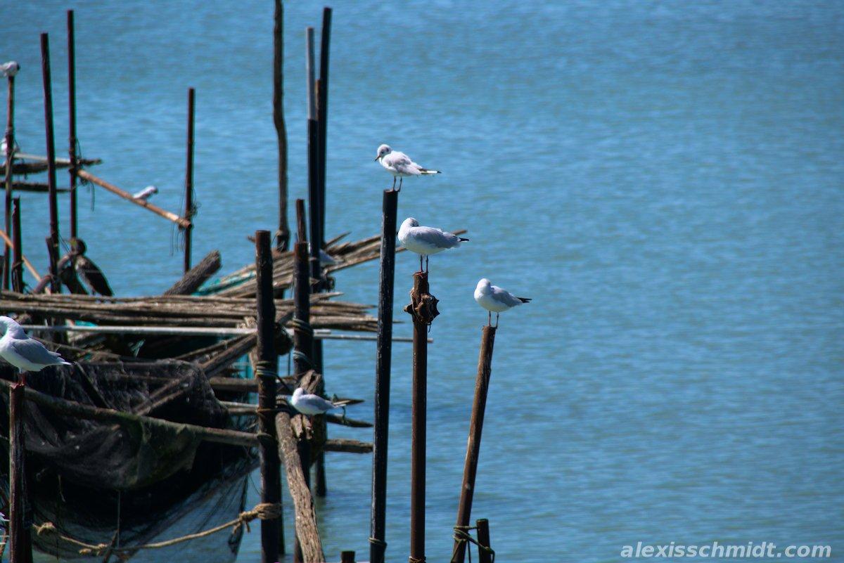Seagulls in Venice, Italy