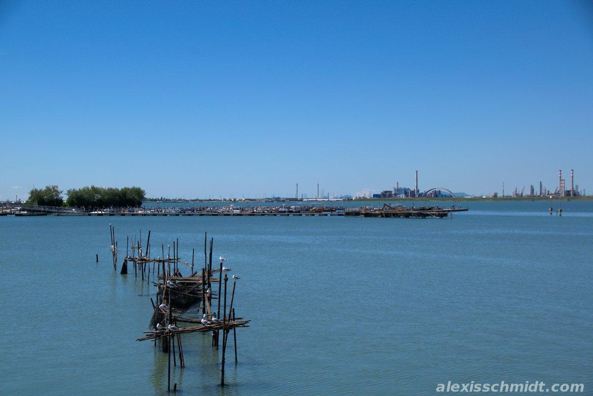 Seagulls in Venice