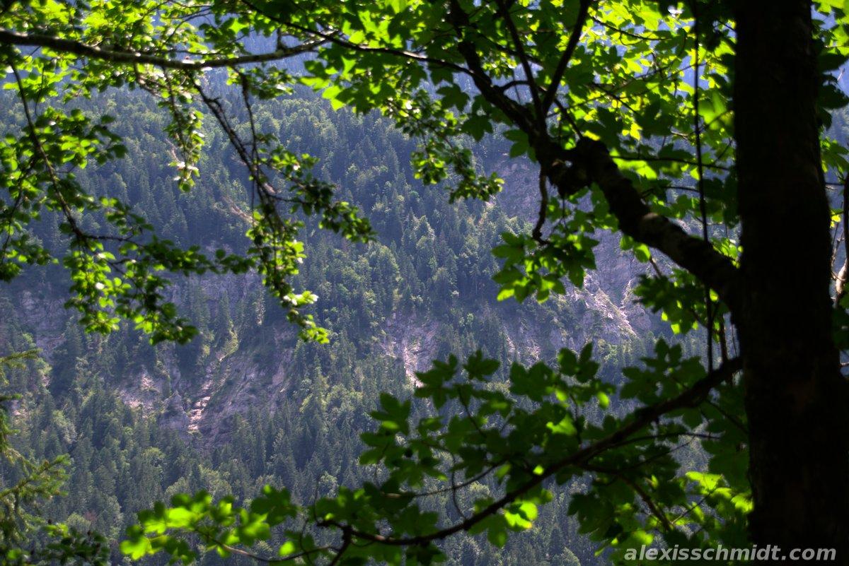 In the Forest near Partnachklamm, Germany