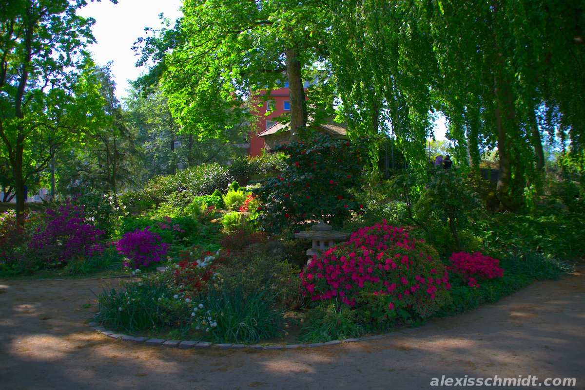 Flower Garden in Bethmannpark, Frankfurt, Germany