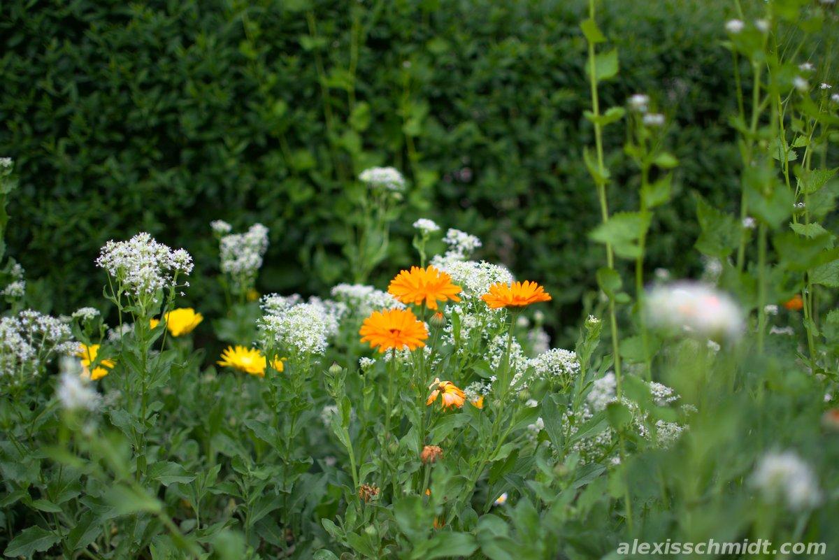 Flowers in Ostpark Frankfurt, Germany