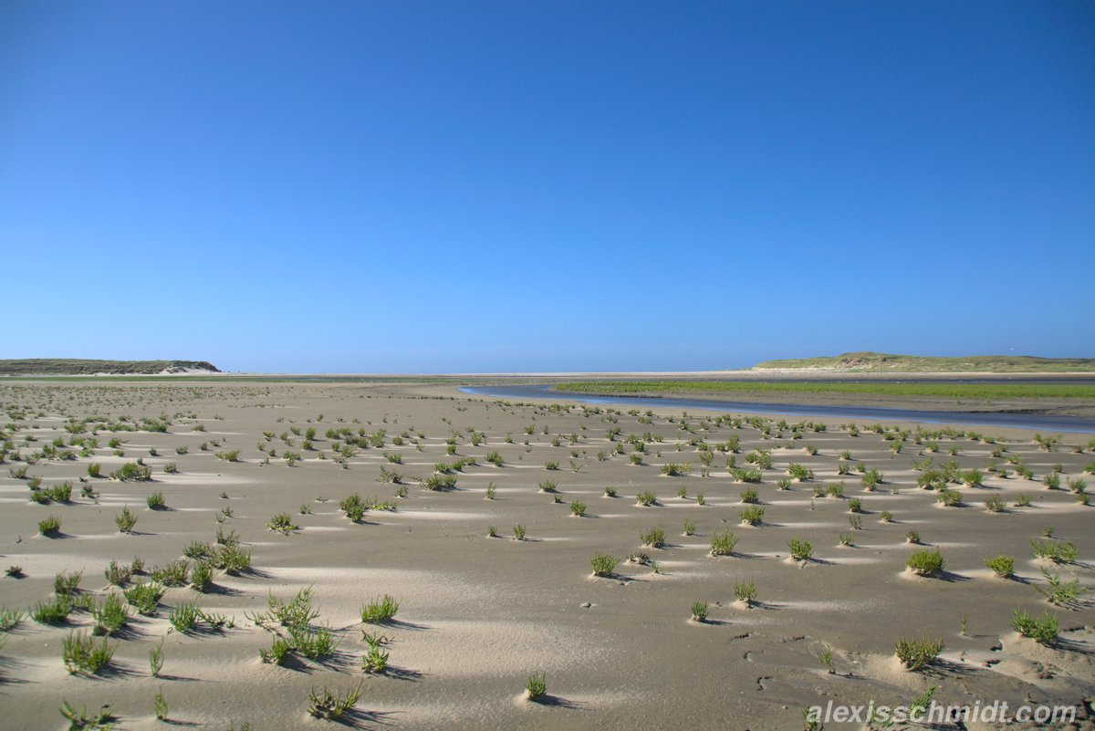 Gras, Sand und Priel in De Slufter, Texel, Niederlande